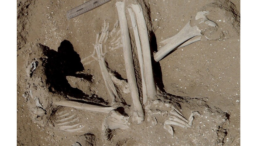 Skeletal evidence of a 10,000-year-old massacre