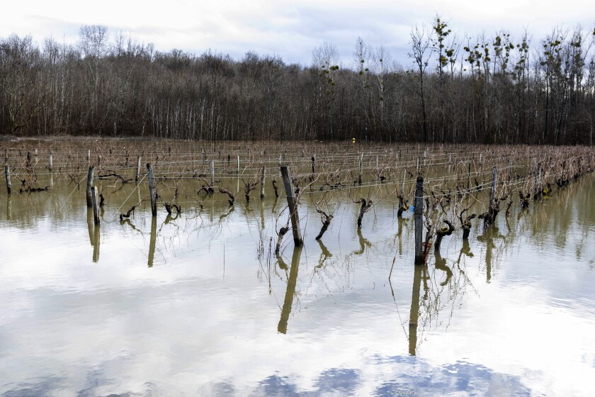 Floodwaters submerge vineyards near Cognac, southwestern France, Sunday, Feb. 7, 2021. Scientists say damaging frost that caused significant economic loss to France's central winegrowing region this year was made more likely by climate change. A report released Tuesday, June 15, 2021 by a group of researchers who study the link between global warming and weather events suggests that the intense April 6-8 frost in France was particularly damaging due to a preceding warm period in March. (AP Photo/Yohan Bonnet)