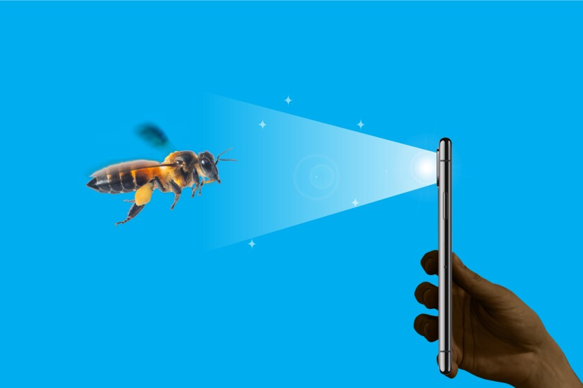 Want to help bees? Grab your smartphone.