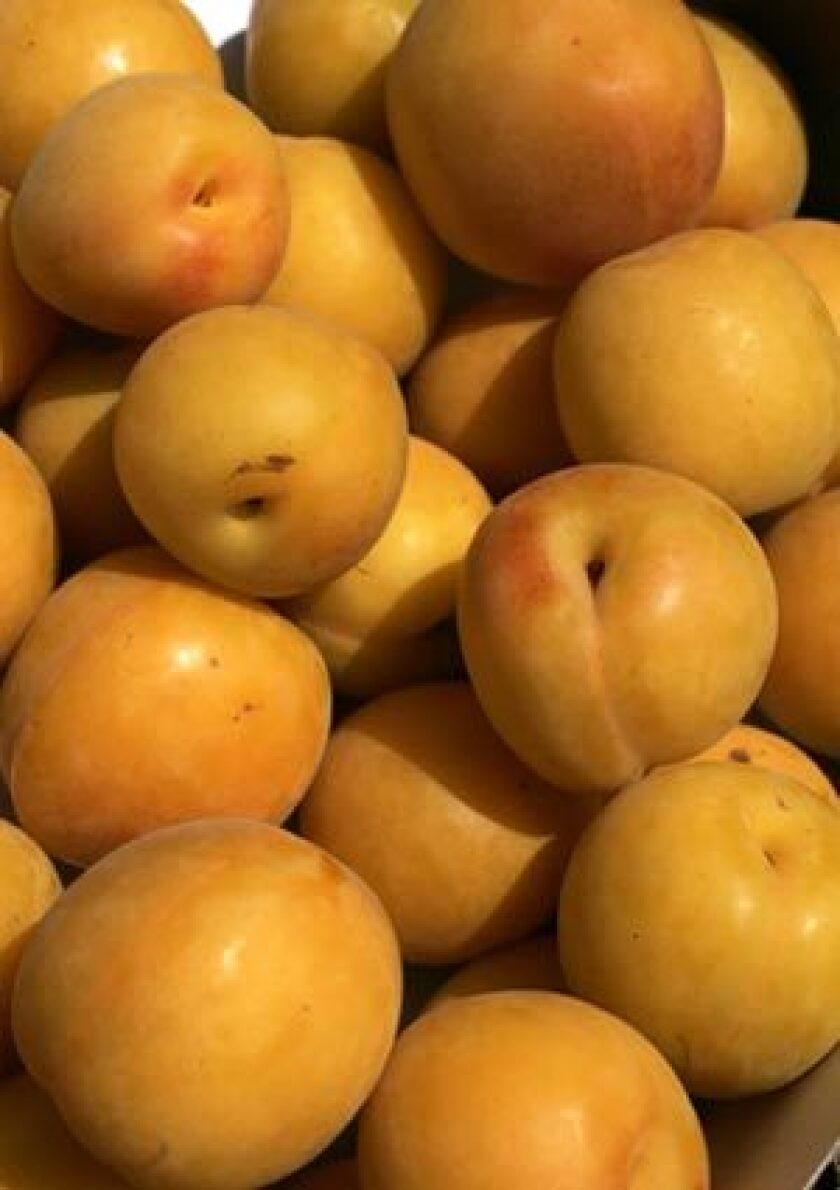 SWEET: Apriums can be used in place of apricots in recipes.
