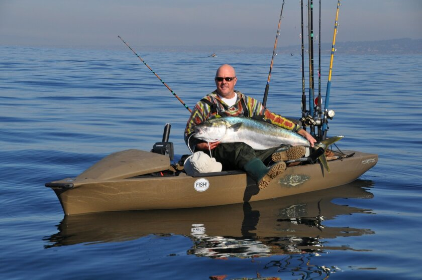 Kayak angler Kurt Hoffman landed this giant yellowtail off La Jolla last Saturday. It weighed 52.1 pounds after being bled out at sea.