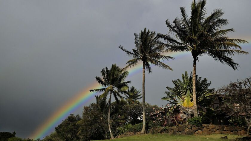 LAHAINA, HAWAII-MARCH 23, 2019: A rainbow is framed through palm trees in Lahaina, Hawaii on March