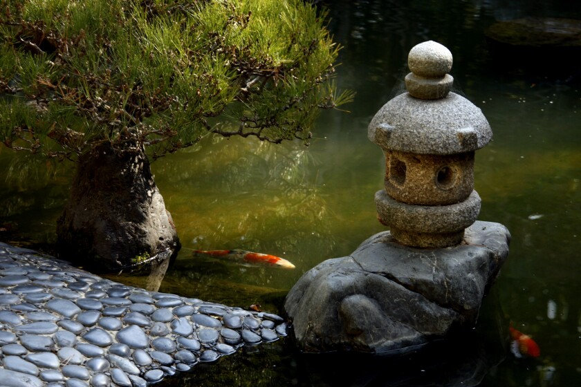 Koi swim in 2012 near a smooth pebble path at the Hannah Carter Japanese Garden in Bel–Air.