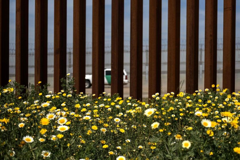 Wild flowers bloom in front of the US-Mexico border fence seen from Tijuana.