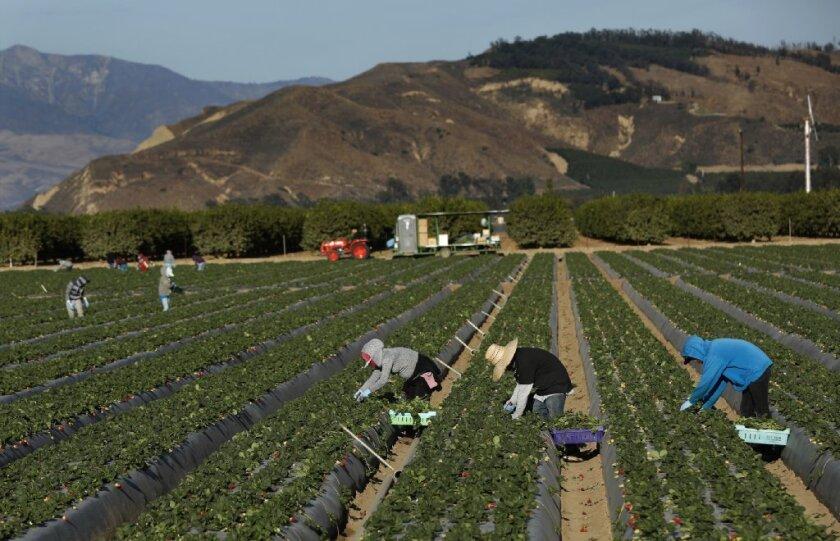 Revelan las 12 compañías de empleo más sucias contra los inmigrantes y latinos