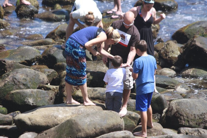 A family looks at what was retrieved from the tidepools at La Jolla Cove in 2015.