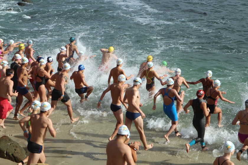 Swimmers in the first (youngest) heat hit the water in the La Jolla Cove Swim, 9 a.m. Sunday, Sept. 8.