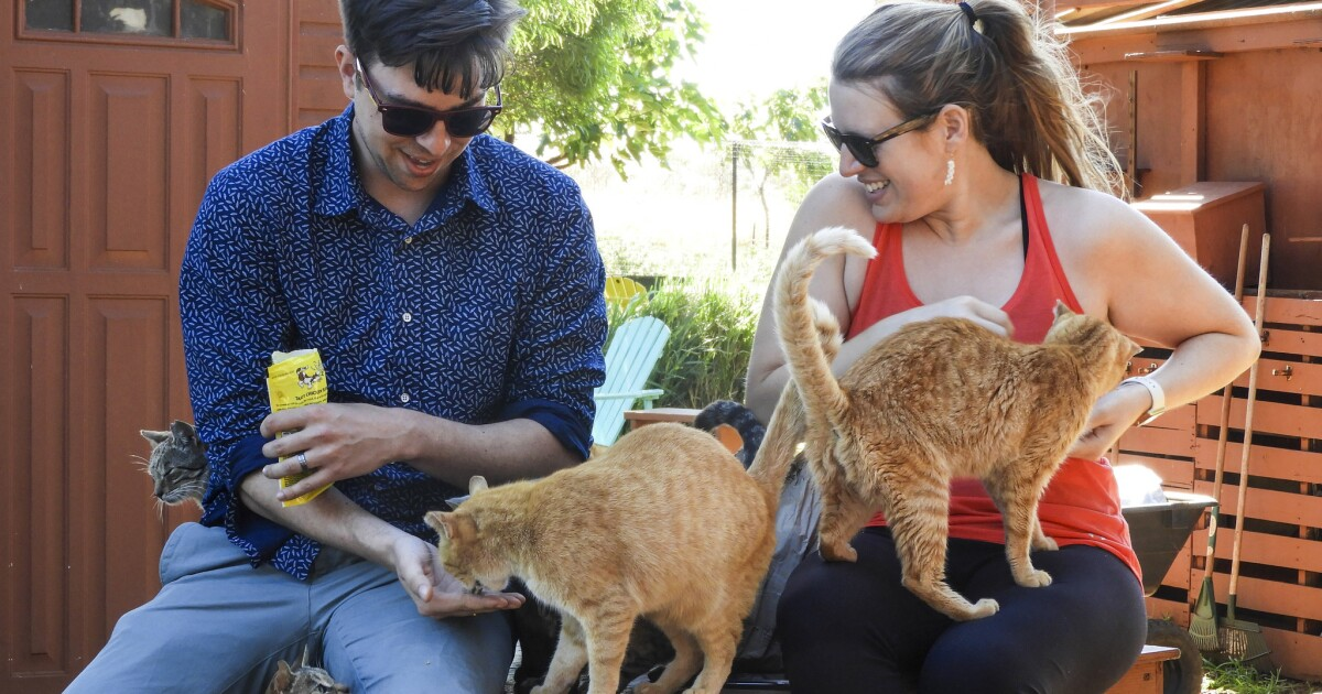 Missing your cat while you're in Hawaii? Lanai's sanctuary lets you cuddle up
