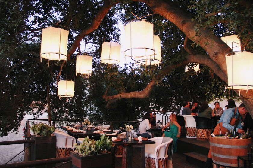 Animalon is a pop-up dinner series staged under a 100-year-old oak tree.
