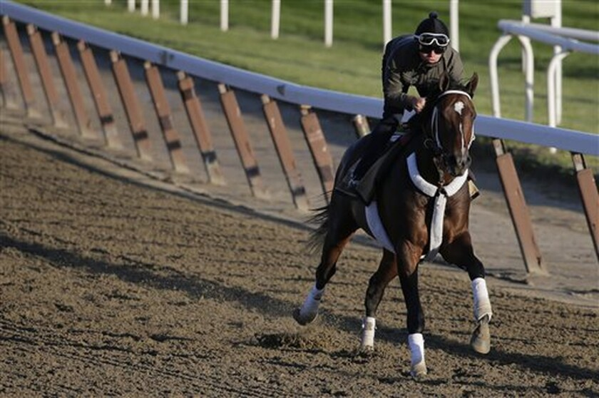 Commanding Curve gallops around the track at Belmont Park on June 6, 2014 ahead of the Belmont Stakes.