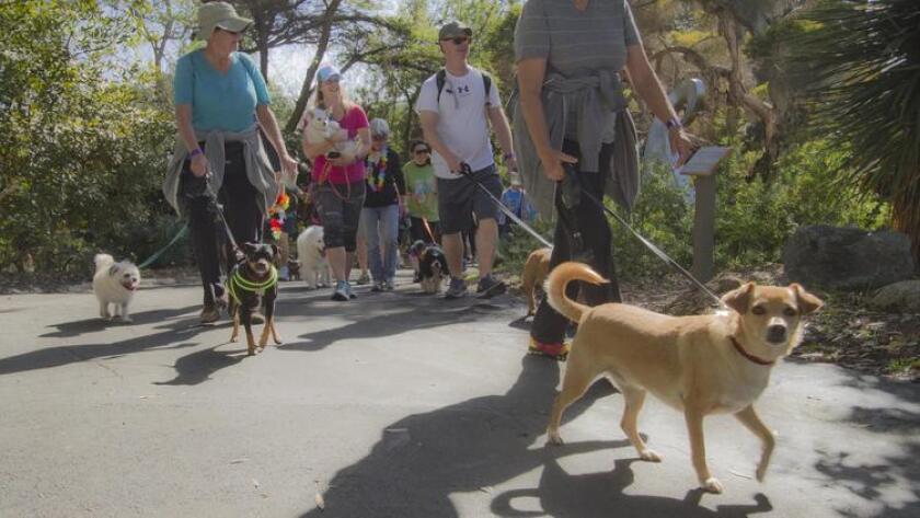The San Diego Botanic Garden's fifth annual 5K Paw Walk in the Garden is Feb. 18. (Courtesy of SD Botanic Garden)