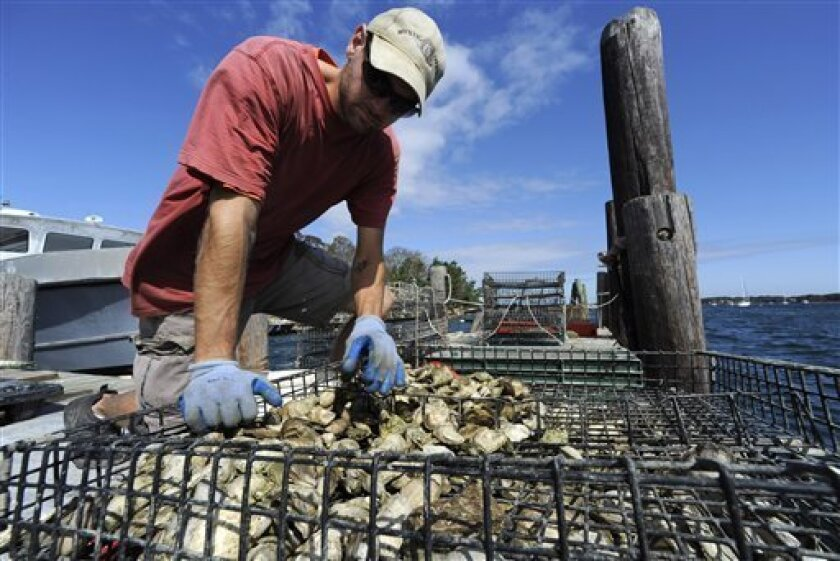 "In this Sept. 28, 2011 photo, David Lindenberger, a farmer at the Noank Aquaculture Cooperative, sorts and bags harvested oysters for distribution in Noank, Conn. The damaged docks and scattered oysters left after Tropical Storm Irene tore through Long Island Sound this summer reveal only some of the problems Connecticut oystermen face in trying to rebuild their industry along the Mystic River. They worry a shutdown of more than a month will result in a permanent loss of customers and express irritation over what they consider a slow process to get permits for winter harvesting from the river and growing oysters in indoor tanks to extend their season. There's also some frustration at being regulated like fishermen when they consider themselves ""growers,"" akin to farmers and in need of the same kinds of government aid. (AP Photo/Jessica Hill)"