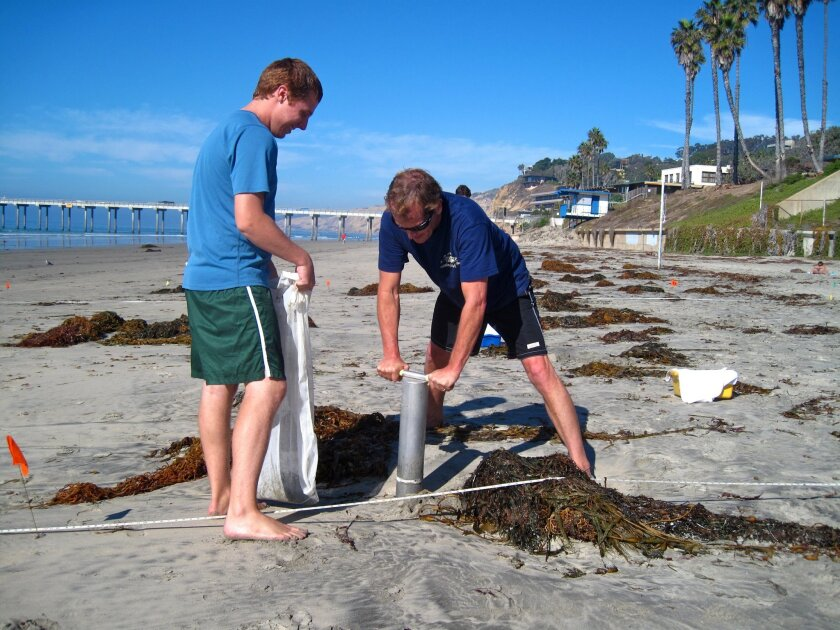 Researchers from the University of California Santa Barbara sample sand at Scripps beach in La Jolla last fall. Dave Hubbard, right, is coring the sand, while Matt Kirkey is holding the sifting bag.