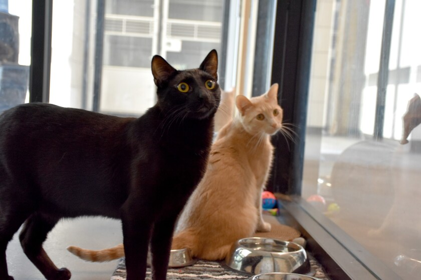 Magnus and Rufus are the Pets of the Week at Helen Woodward Animal Center.
