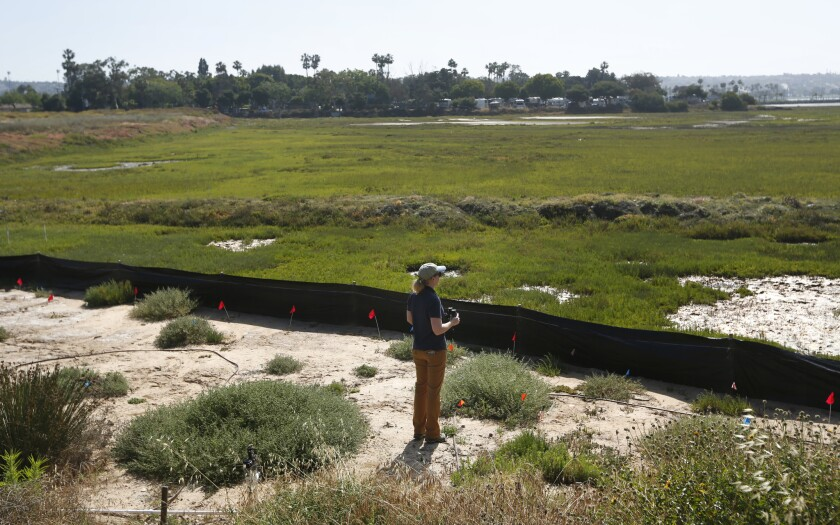 San Diego Audubon's director of conservation, Rebecca Schwartz Lesberg, looks over Kendall-Frost Marsh on the north side of Mission Bay.
