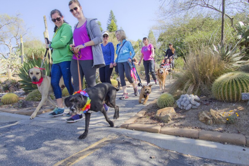 Dogs and their companions enjoy annual dog walk.