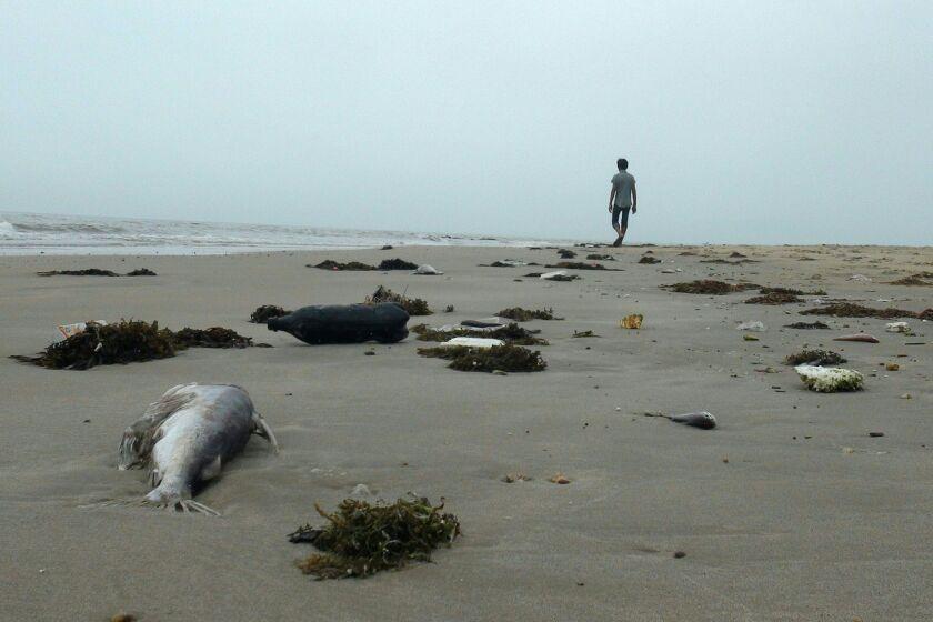 TOPSHOT-VIETNAM-TAIWAN-FISHING-ENVIRONMENT-COMPANY