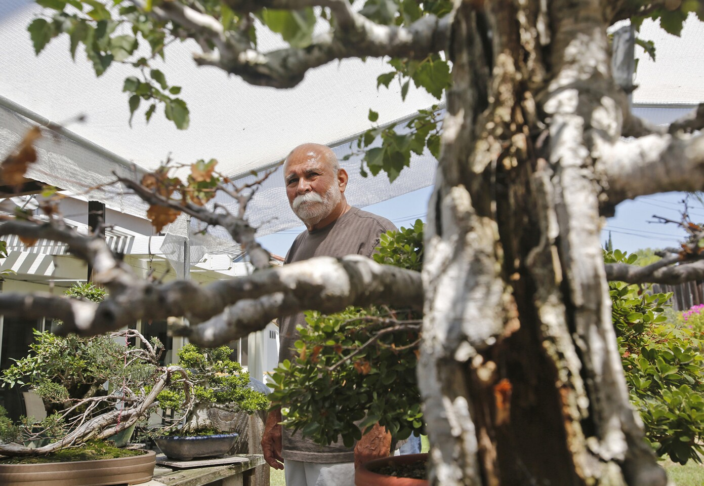 Manny Marinez and his backyard bonsai tree gallery