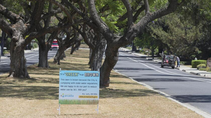 La ciudad de Arcadia dejó de regar el césped en el camellón de la avenida Santa Anita para cumplir con las regulaciones de sequía del estado.