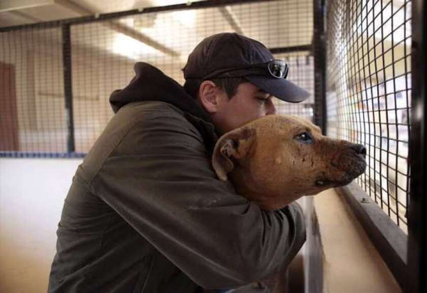 Michael Vick's prize pit bull, and how he became a loving pet