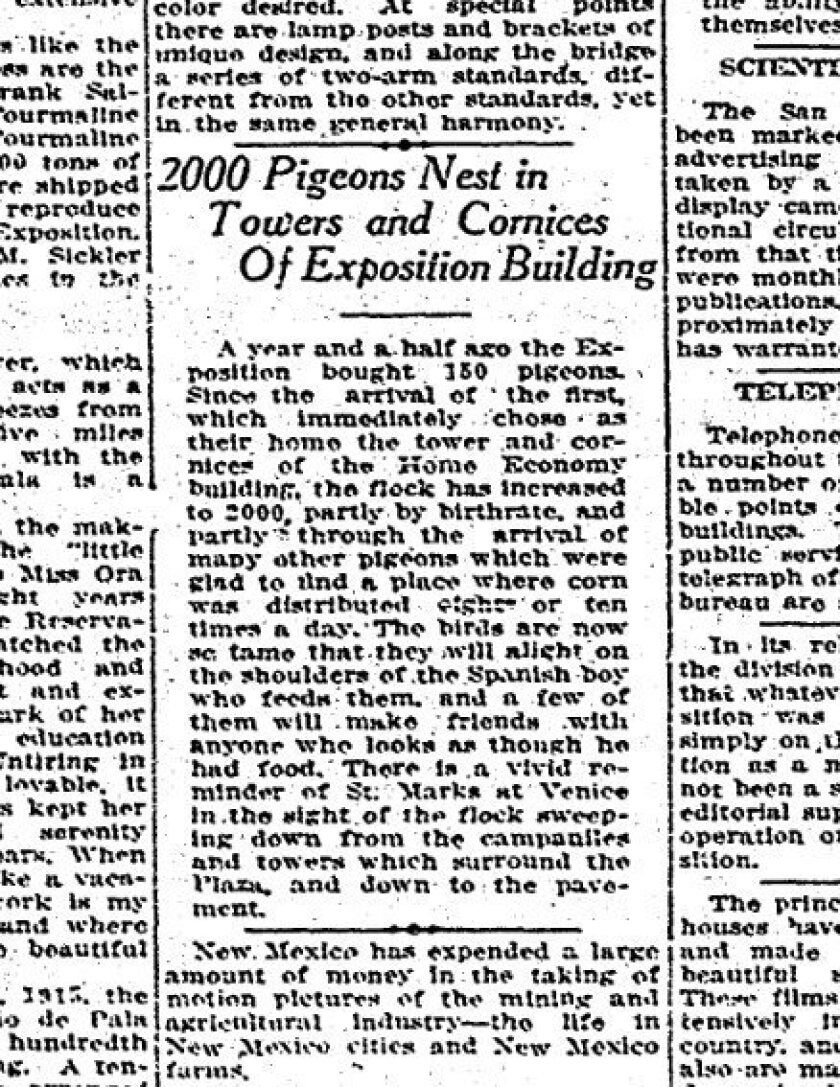 A news story describes the pigeon strategy at the 1915 expo.