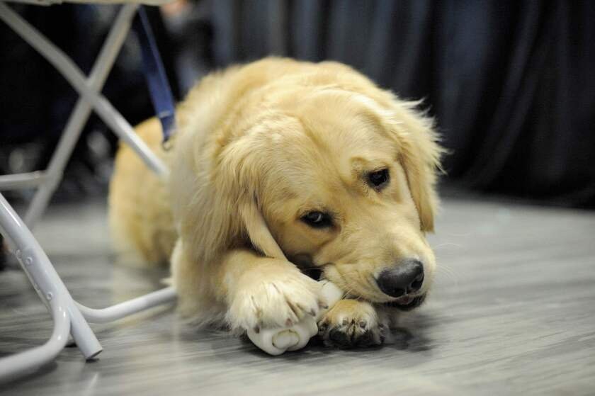 FILES-US-POLITICS-PETS-DOGS