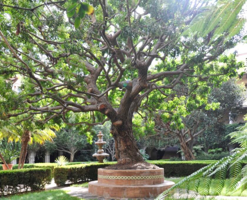 Aspiring Families outdoor garden