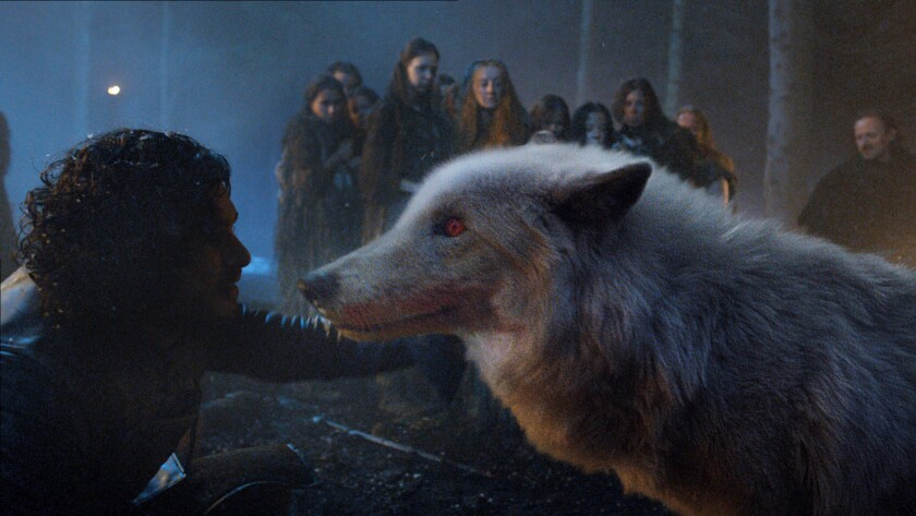 GAME OF THRONES episode 35 (season 4, episode 5): Ghost, the direwolf belonging to Jon Snow (Kit Har