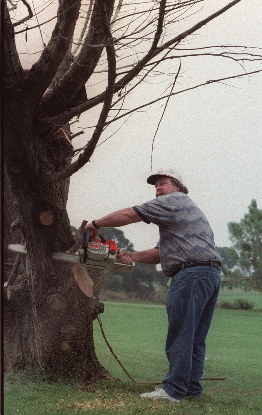 Craig Stadler helped cut down a tree on 14th hole at Torrey Pines South in 1995. The tree played a role in Stadler's DQ from 1987 event. U-T file photo