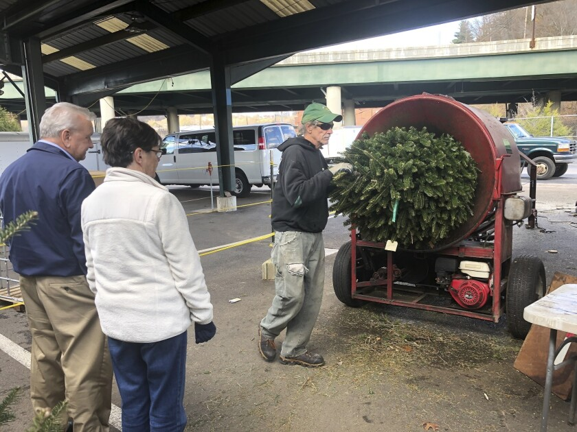 A newly bought Christmas tree is put into a wrapping machine