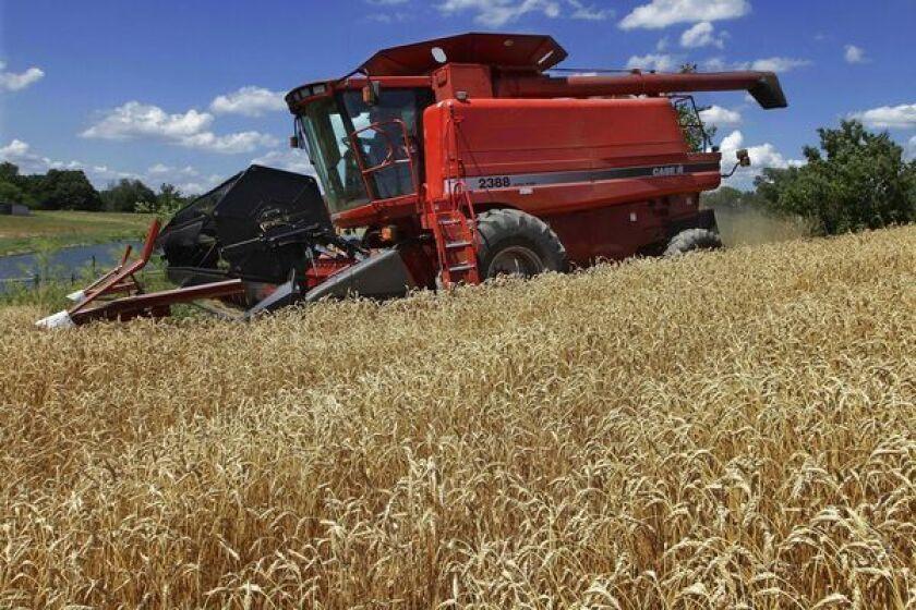 Genome of bread wheat laid bare for scientific gleaning