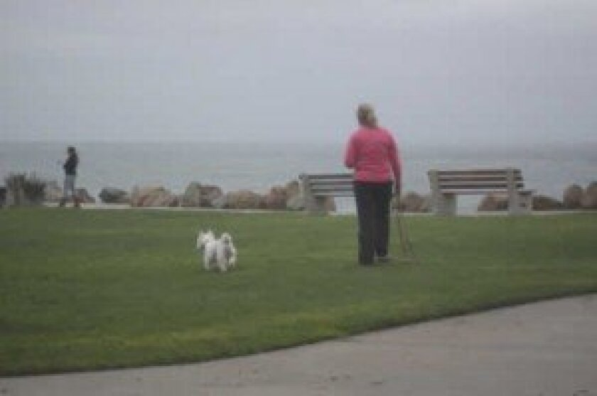 Dogs are often spotted off leash in the early evening hours at Calumet Park. Ashley Mackin