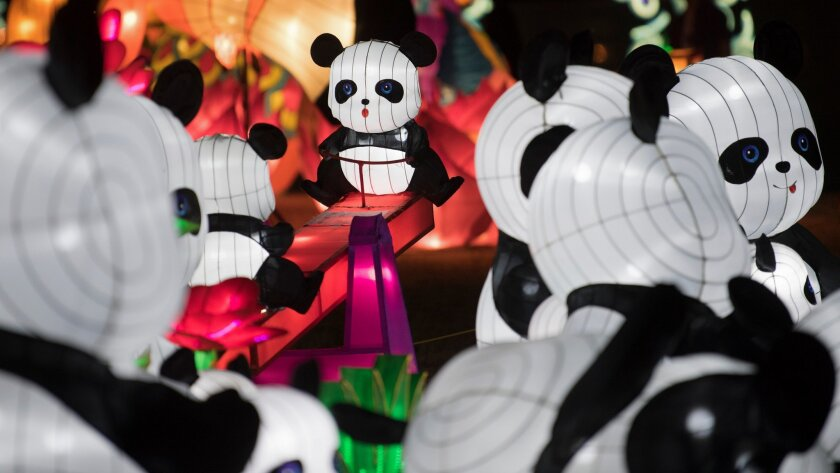 A group of pandas is seen on the opening night of the China Lights lantern festival Friday, January
