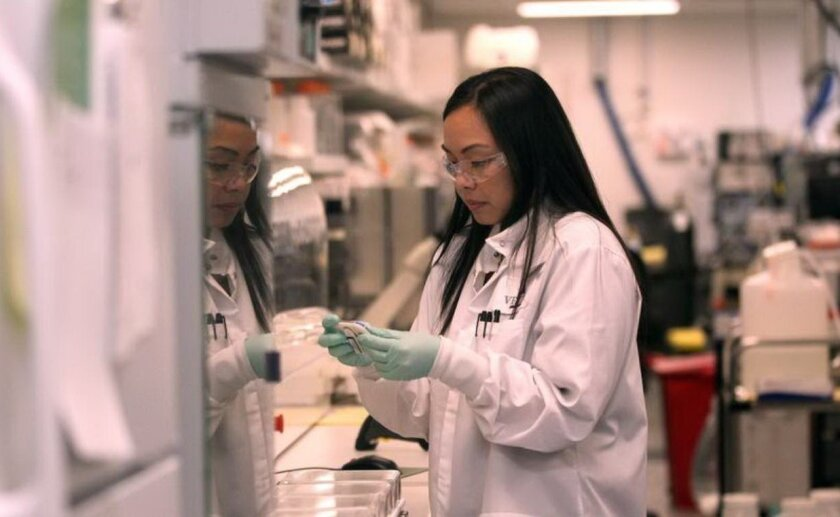 Vertex, a Boston-based company with operations in San Diego's Torrey Mesa, plans to double its existing office space here. Vertex specializes in drugs for rare or hard-to-treat diseases. Research associate Grachelle Lorenzana works in the lab.