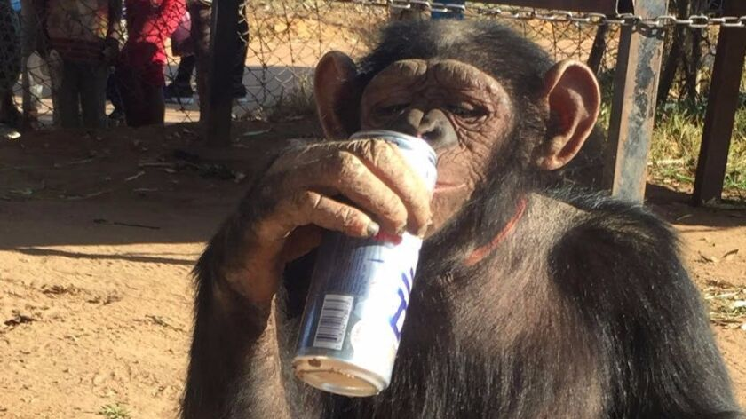 When Grobler bought a meal for Leila, a chained-up chimpanzee abandoned by her owner, she poured the