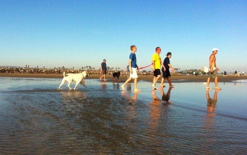 Ocean Beach's Dog Beach