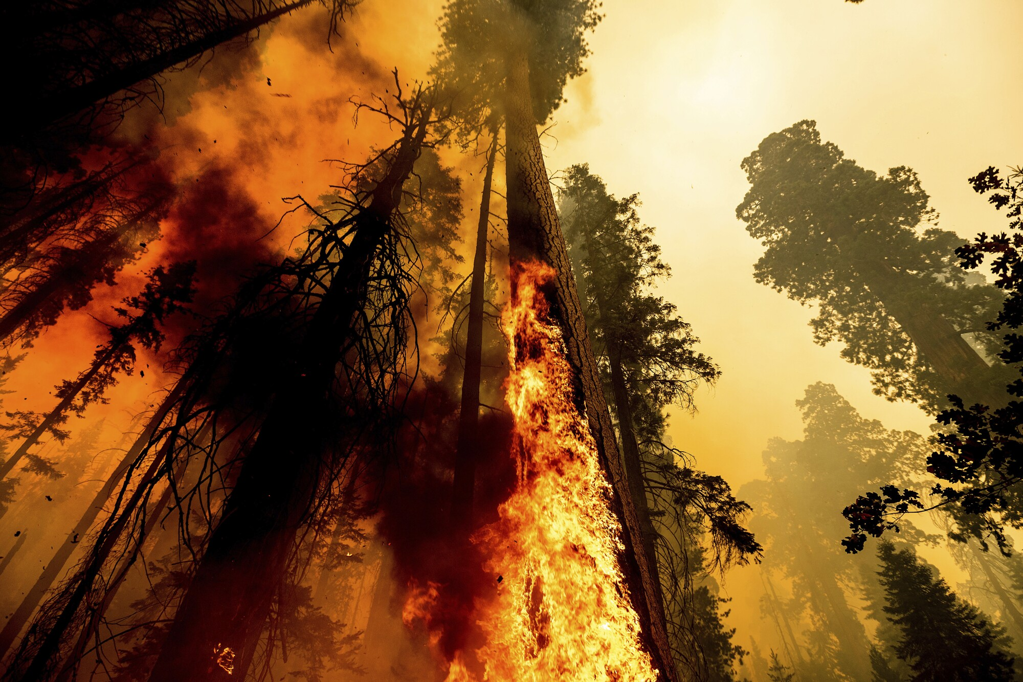 Flames lick a tree as the Windy fire burns in Sequoia National Forest.