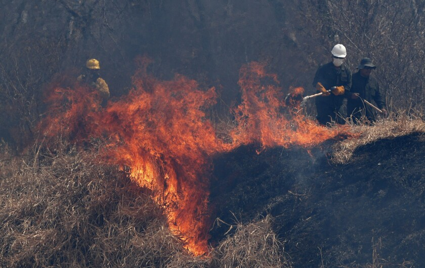 FILE - In this Aug. 30, 2019 file photo, police and firefighters work to put out a fire in the Chiquitania forest on the outskirts of Robore, Bolivia. Fires have consumed more than 3.1 million hectares (12,000 square miles) of forests and grasslands in just over a month in Bolivia, according to an environmental group, with the blazes affecting the South American country's Amazon region. (AP Photo/Juan Karita, File)