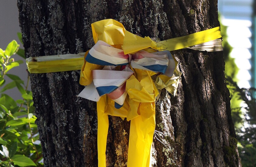 A yellow ribbon is tied to a tree outside the family home of slain journalist James Foley, in Rochester, N.H.