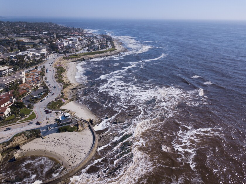 Algae blooms, also known as red tides, have turned the ocean water brown in La Jolla and along the rest of the San Diego coast.