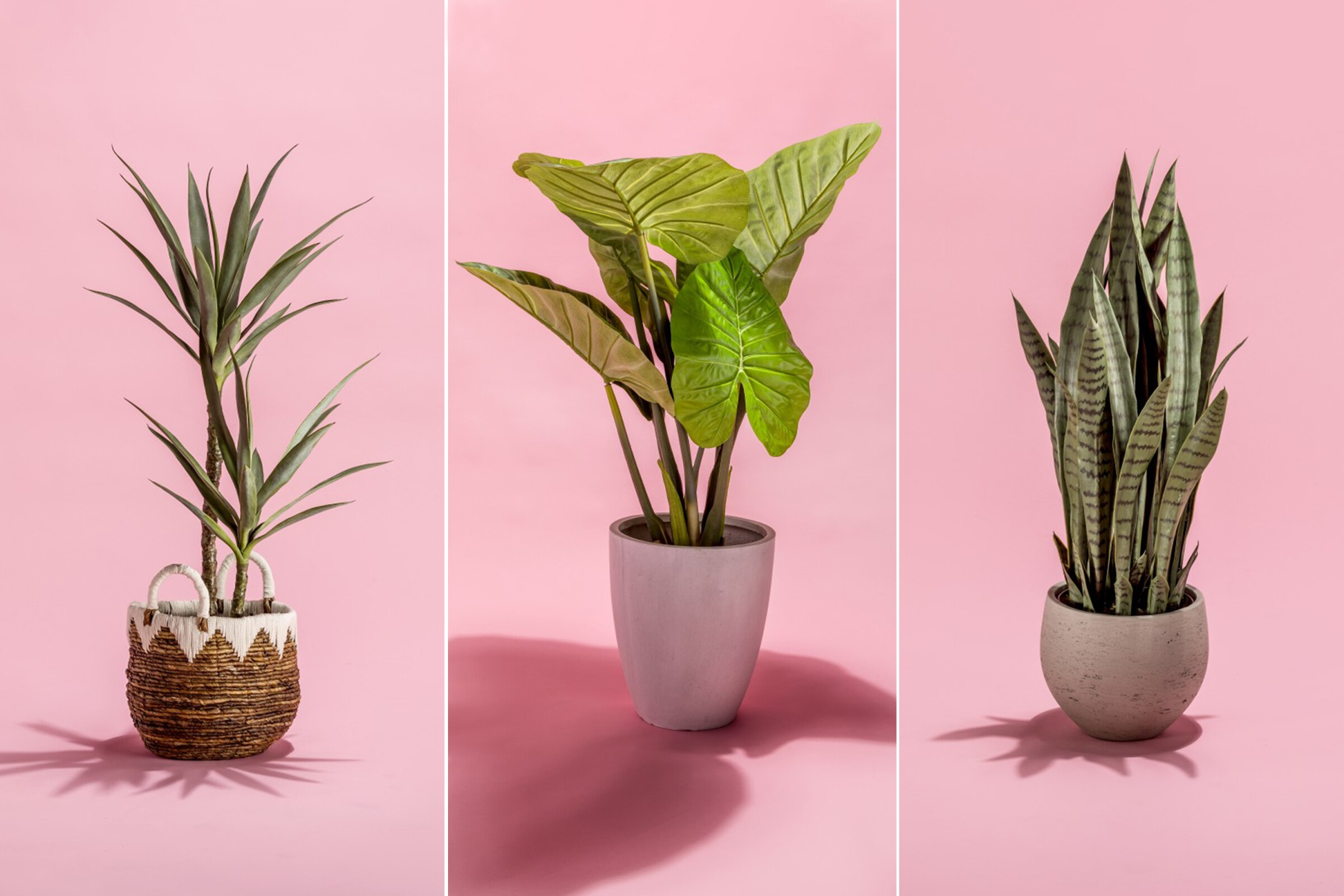 Faux real: Fake plants that would fool Mother Nature - Los Angeles Times