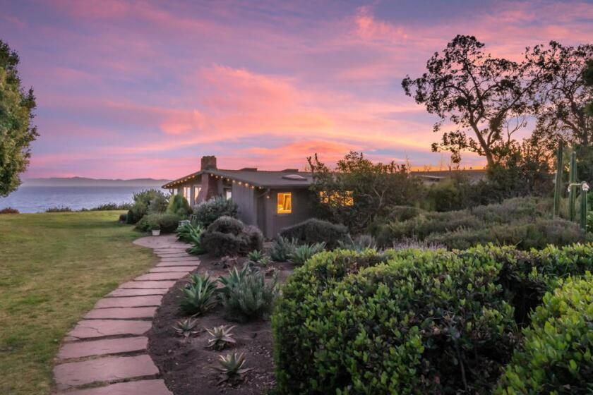 Hot Property | Mike Love