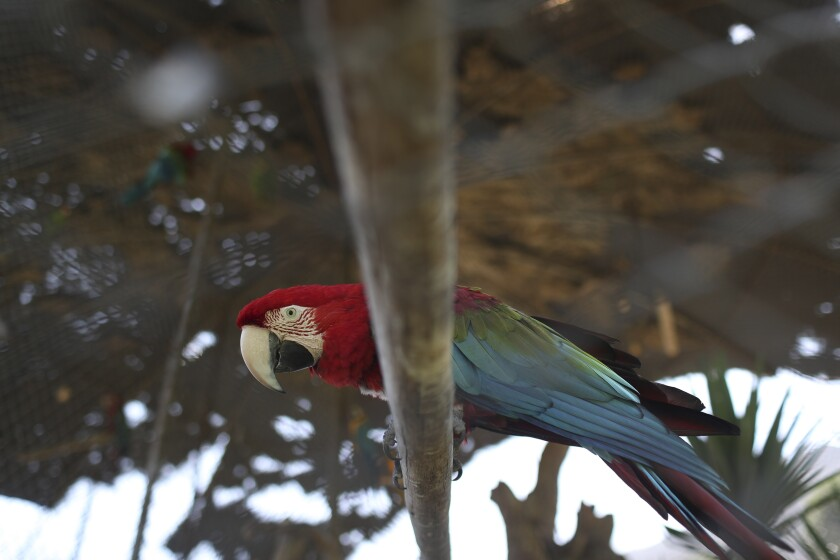 A macaw parrot perches on a piece of wood