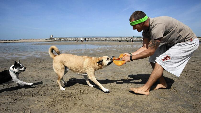 Sean Rowe of Newport Beach plays with his dog Jameson at a stretch of sand near the Santa Ana River mouth. They'll have to find another place starting Monday, when a dredging project will close the beach for months.