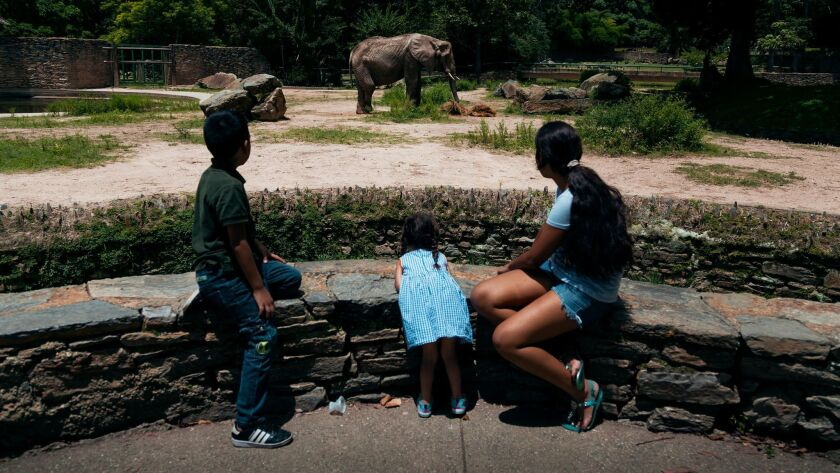 Children look at Ruperta, the main attraction of the Caricuao zoo in Caracas, Venezuela.