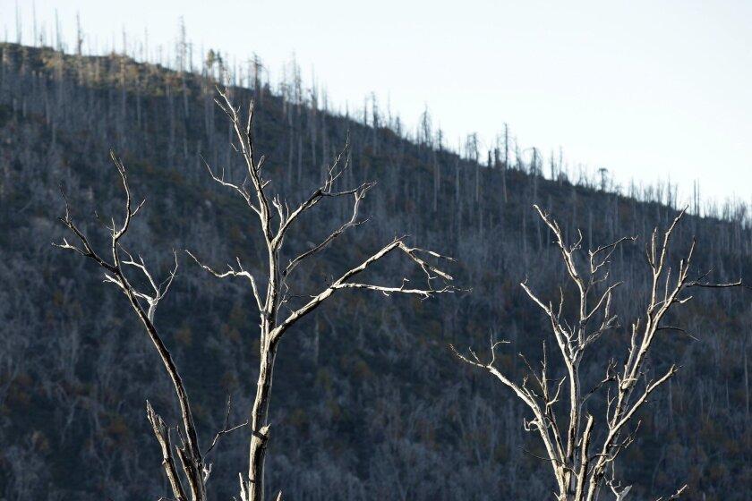 San Diego County's backcountry still carries the scars of the 2003 Cedar Fire.