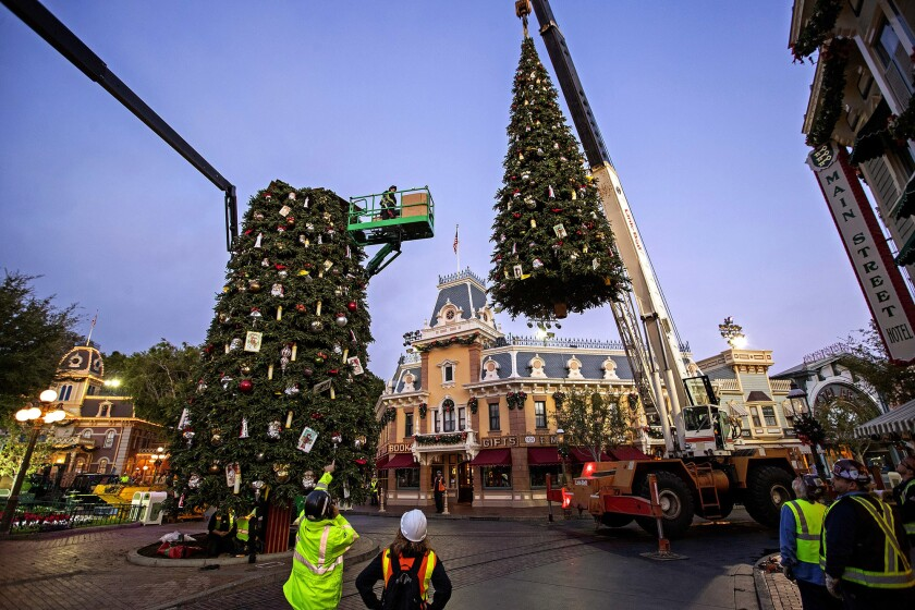 Workers use a crane to hoist the top section of a giant Christmas tree into place as others decorate Disneyland's Main Street U.S.A. The overnight efforts requires dozens of extra workers and meticulous coordination.