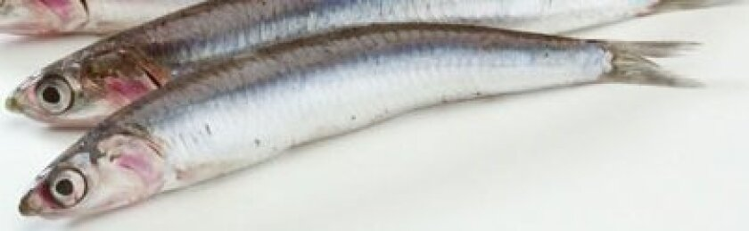 Closeup: anchovy