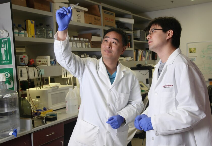 Sanford-Burnham Medical Research Institute professor Dr. Huaxi Xu is a specialist in degenerative diseases. He is the senior author of a new study that shows how people with Down Syndrome invariably develop Alzheimer's Disease.
