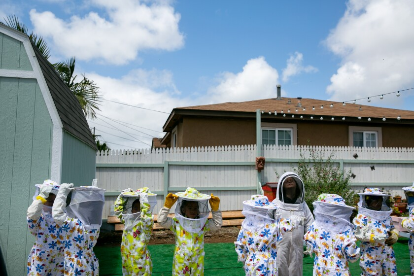 Students Learn About Bees